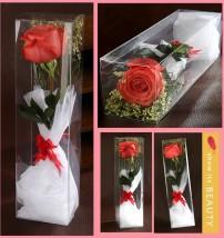 Hộp nhựa trong suốt đựng hoa hồng đẹp (8)